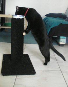 mégaoesophage du chat