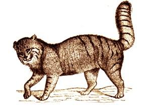 chat Martelli